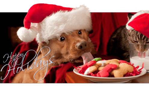 Holiday Baking for Dogs!