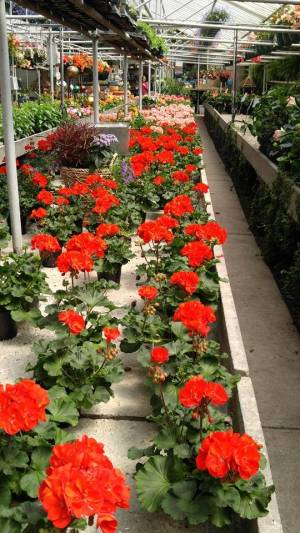 PIERSON'S FLOWER SHOP & GREENHOUSES 90-YEAR ANNIVERSARY CELEBRATION